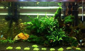 水草造景开缸4个月水草缸稍微像样一点了鱼缸水族箱