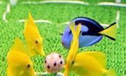海水鱼鱼缸里踢球(多图)