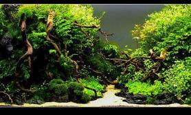水草缸造景沉木杜鹃根mlwIAPLC2013青龙石120CM尺寸设计