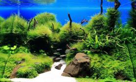 沉木青龙石水草造景60CM尺寸设计32