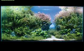 水族箱造景有水水草缸有草水草缸还有鱼沉木杜鹃根青龙石水草泥