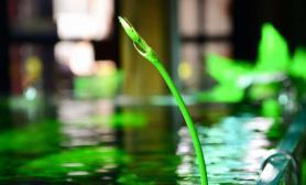 水草造景【异植-草缸印象】茂色染碧 幽泓流绿