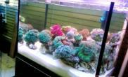 如何控制海水缸光照的时间