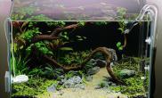 水草造景(60CM)Lauris作品之一沉木水草青龙石
