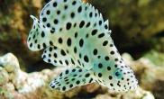 海底世界的十二生肖鱼