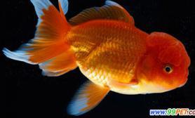 如何减少金鱼水中寄生虫(图)