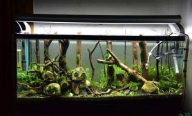 水草造景《绿野丛林》水草缸