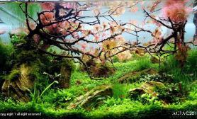 水草造景 小缸作品 泰国 ACT 造景大赛