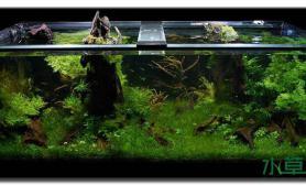 两个木桩镇守水草缸水草缸中的这些景其实也挺简单的