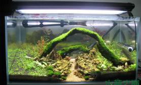 《梦幻双桥》开缸将近一个月水草缸晒一下沉木杜鹃根青龙石水草泥(烟台)