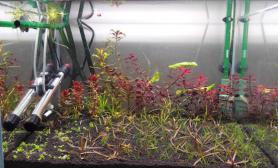 新开两缸水草缸供大家评鉴鱼缸水族箱
