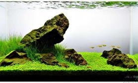 无水状态的草缸水草缸美的惊心动魄
