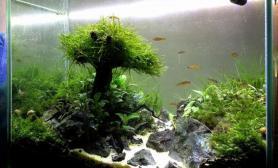 水族箱造景水草造景---孤独的小树