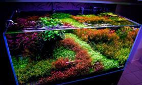 彩虹水草缸造景沉木水草泥化妆砂青龙石120CM尺寸设计