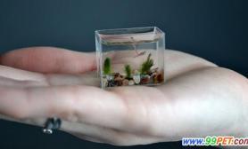 养鱼杰作微型玻璃鱼缸(图)