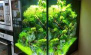 厨房里的小草缸—莫丝树造景
