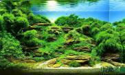 水草造景【赢阳光几何全光谱LED】向往的绿色