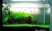 简单了解鱼缸里的藻类