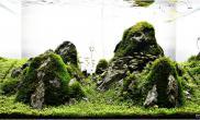 水草缸造景沉木水草泥化妆砂青龙石60CM尺寸设计70