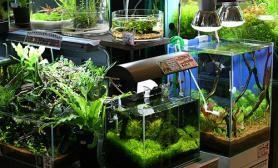 原创造景鉴赏天野的作品大小鱼缸画廊