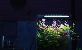 小缸鱼缸水族箱