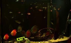 懒癌症未期鱼友的鱼缸(草种久了水草缸换种心情)