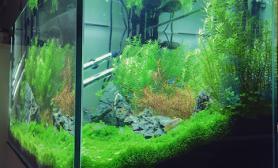 90cm草缸半年后最新写真鱼缸水族箱鱼缸水族箱鱼缸水族箱