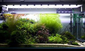 沉木青龙石水草造景120CM尺寸设计37