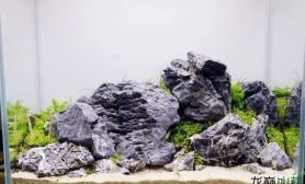 简单清爽的石景缸水草缸只用一点点水草也很有感觉