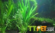 种植水草对养鱼的好处