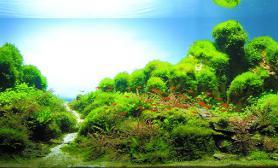 水草缸造景沉木水草泥化妆砂青龙石120CM尺寸设计87