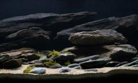 沉木青龙石原生态鱼缸09