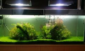 1图片8米单位普通鱼缸水草缸改装草缸