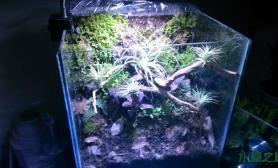水草造景本人的第一个沼泽缸