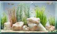 水族箱造景色彩斑斓的水草缸