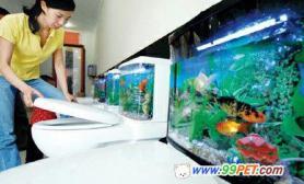 抽水马桶的水箱养金鱼(图)