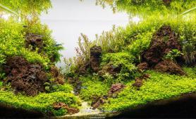 火山石60CM水草造景