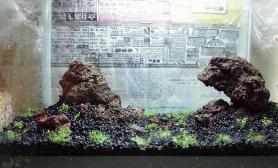 请问这样摆石头水草缸这个造型水草缸可以吗?