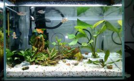 水草造景新开的金鱼缸