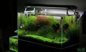 水草缸照明的重要性