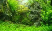 水草缸中丝藻的治理办法