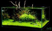 极品方缸造景水草缸有木有?