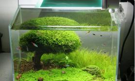沉木青龙石水草造景45CM及以下尺寸设计19