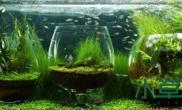 画中有画的花瓶水族缸:「意境式」的水草造景被展现的淋漓尽致