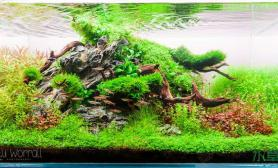 水族箱造景90cm水草缸造景全过程(多图、慎入)