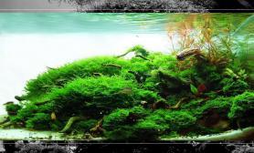 欣赏美景水草缸顺便给眼睛做个spa