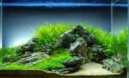 关于超白鱼缸水草造景所需材料