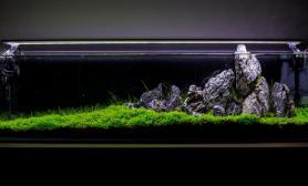 澳洲90厘米超矮无水开缸水草造景作品青龙石