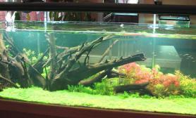 水草缸造景沉木水草泥化妆砂青龙石150CM及以上尺寸设计17