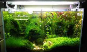 长期潜水水草缸我也来发个自己的缸